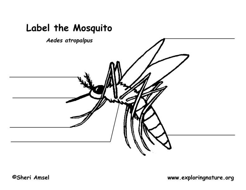 mosquito labeling page