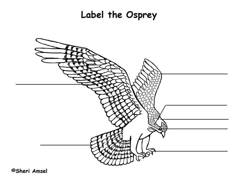 Osprey Labeling Page