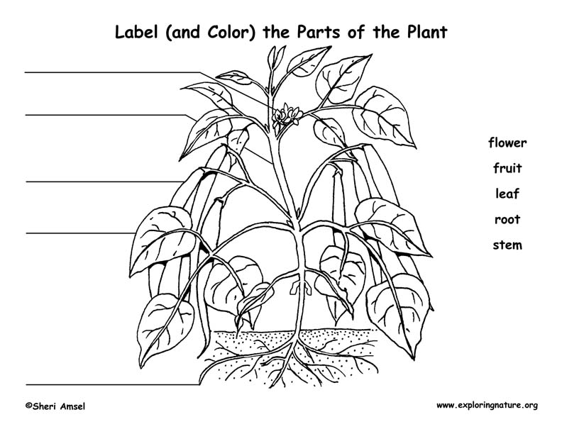 label the parts of the plant  elementary