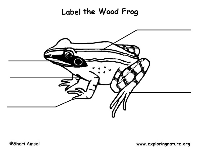 Wood Frog Labeling Page