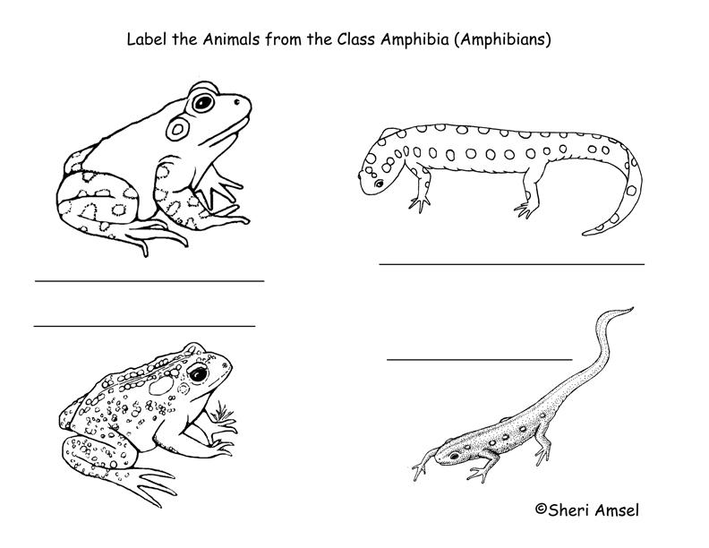 Amphibians Labeling Page