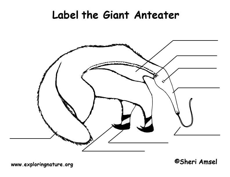 Anteater Labeling Page