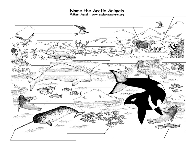 Arctic Labeling Page