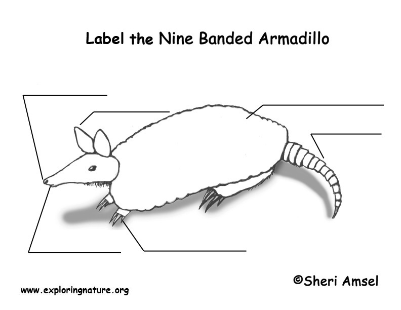 Armadillo Labeling Page