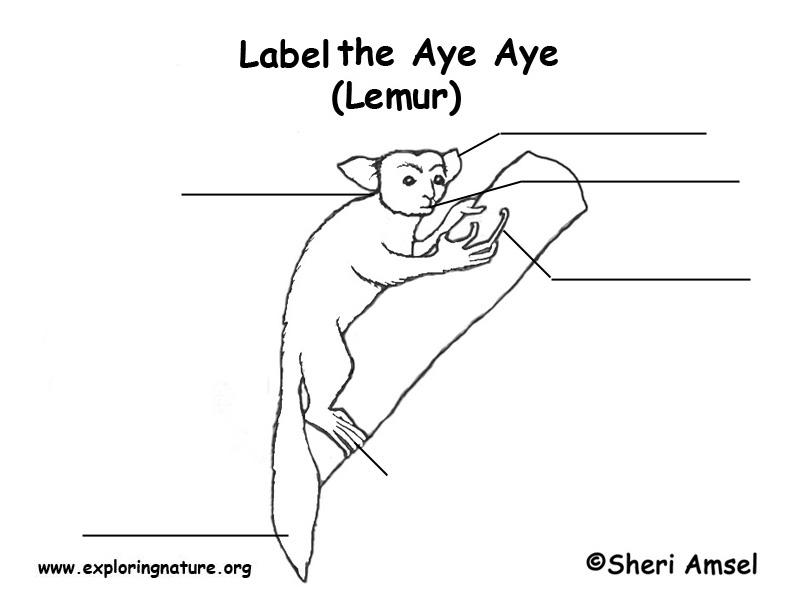 Aye Aye Labeling Page