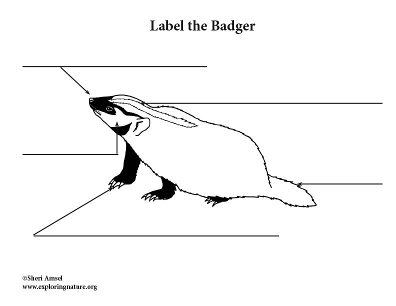 Badger Labeling Page