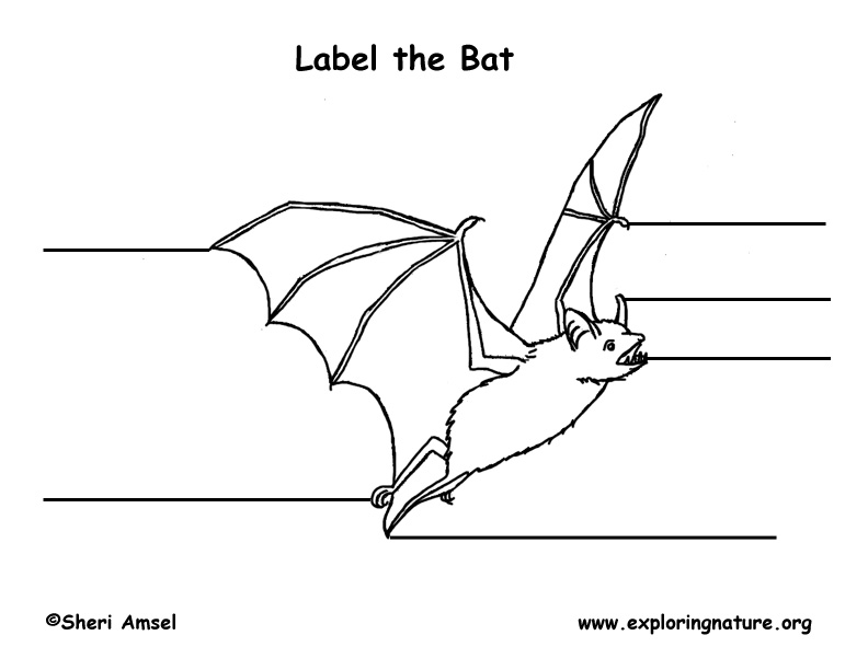 label bat diagram bat labeling page parts of a bat diagram