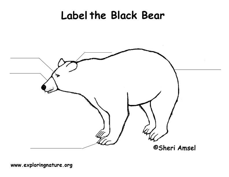 Black Bear Labeling Page
