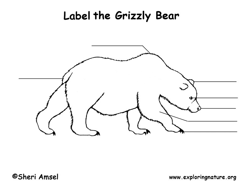 Grizzly Bear Labeling Page