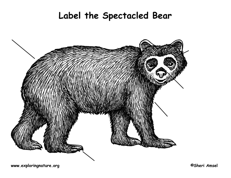 Bear (Spectacled) Labeling Page