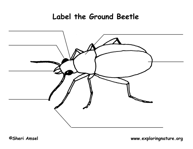 beetle labeling page