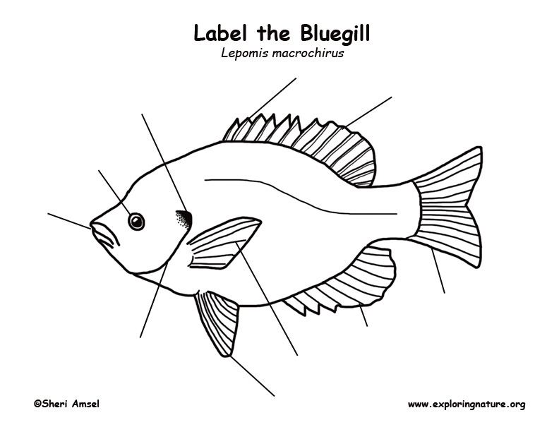 bluegill labeling page