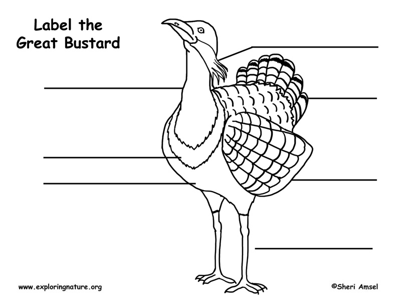 Bustard (Great) Labeling Page