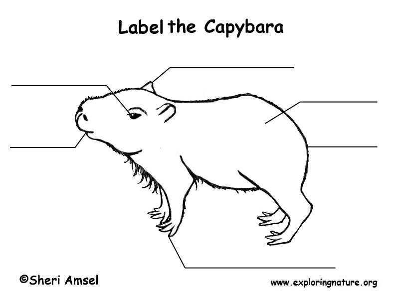 Capybara  Labeling Page