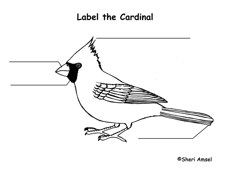 Cardinal Labeling Page