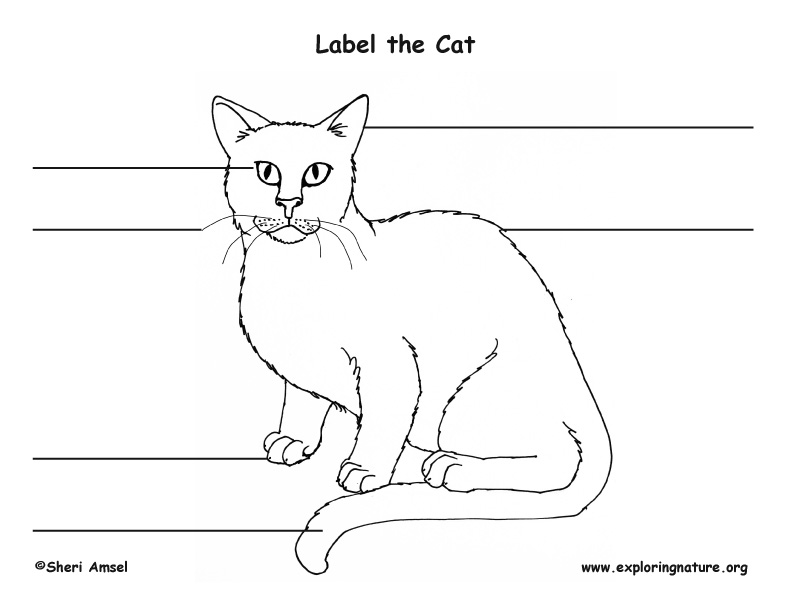 Cat labeling Page
