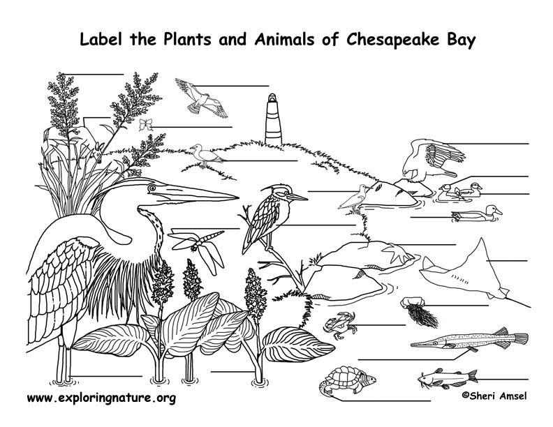 Chesapeake Bay Labeling Page