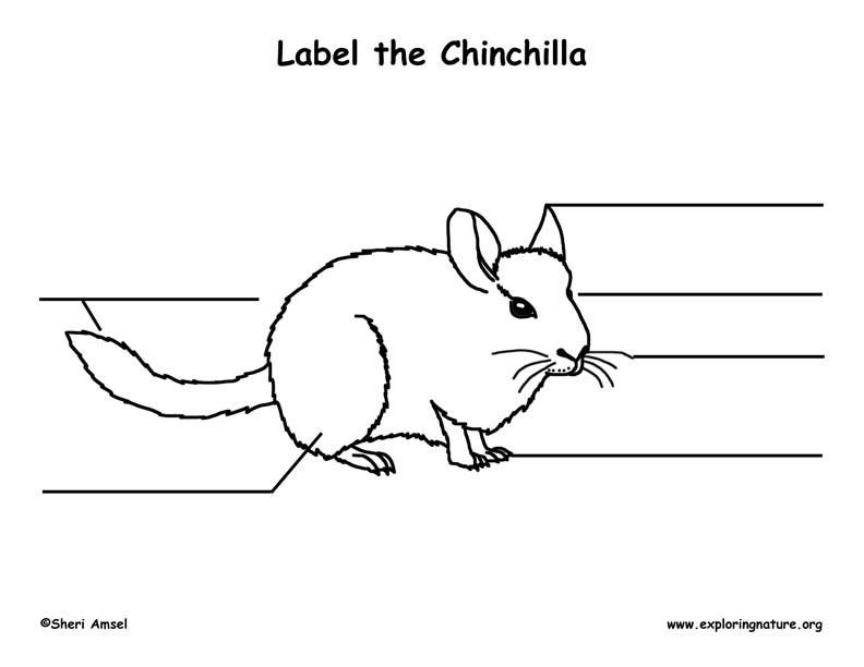 Chinchilla Labeling Page