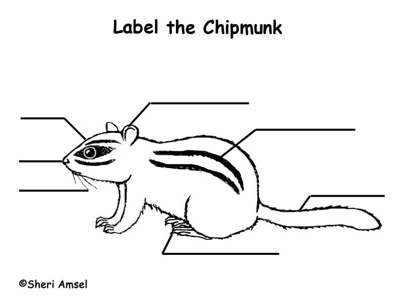 Chipmunk  Labeling Page