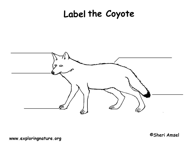 Coyote Labeling Page