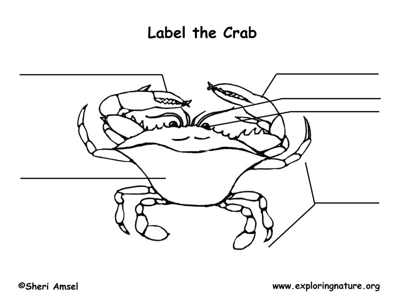 Crab (Green) Labeling Page