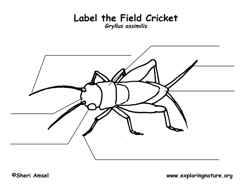 Cricket Labeling Page