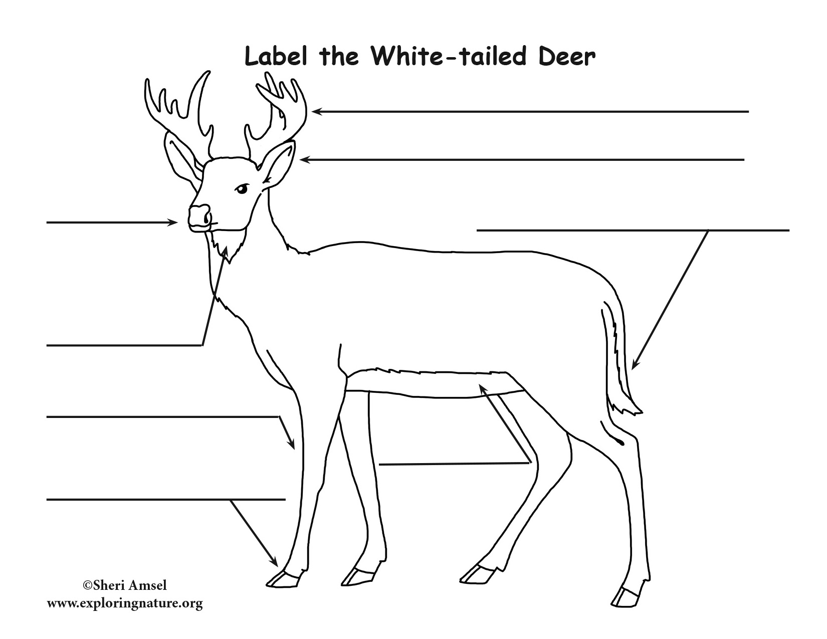 White-tailed Deer Labeling Page
