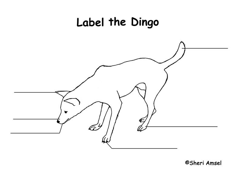 Dingo Labeling Page