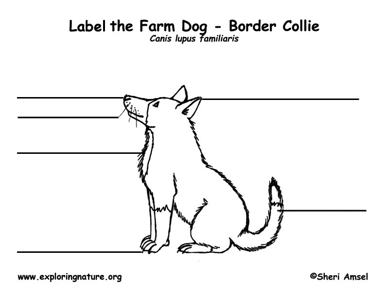 Dog Labeling Page