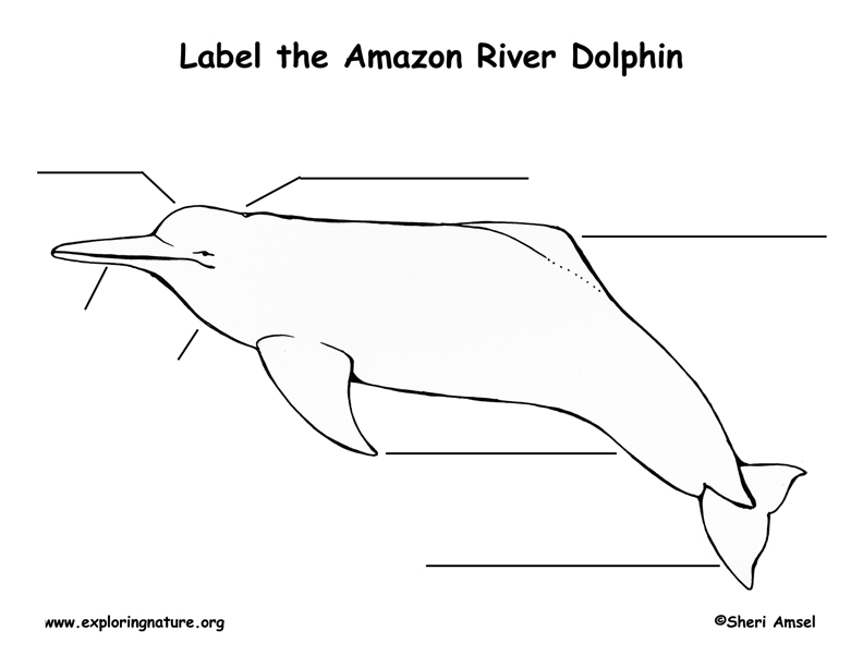Amazon River Dolphin Labeling Page,  Boto Labeling Page