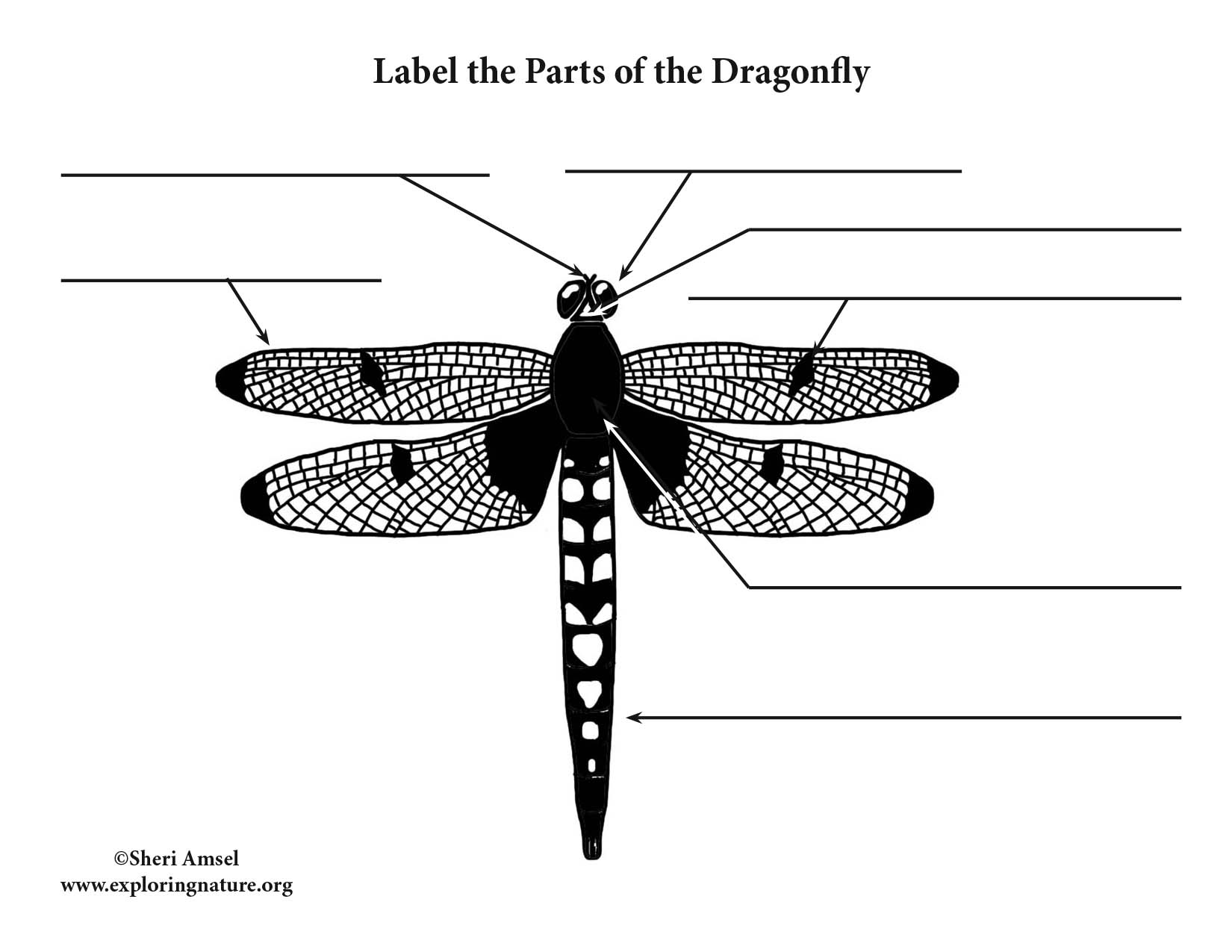 Dragonfly Labeling Page