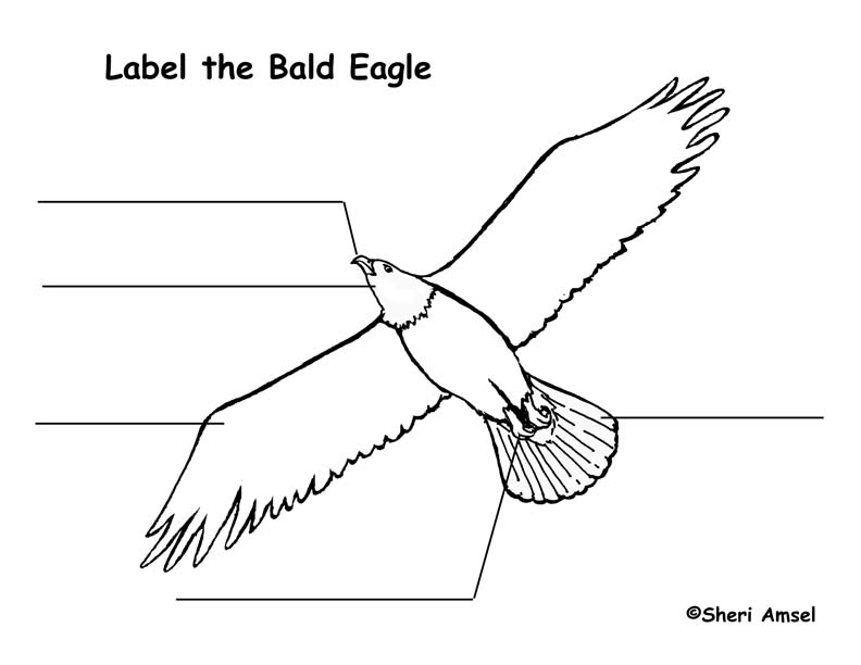 eagle  bald  labeling page