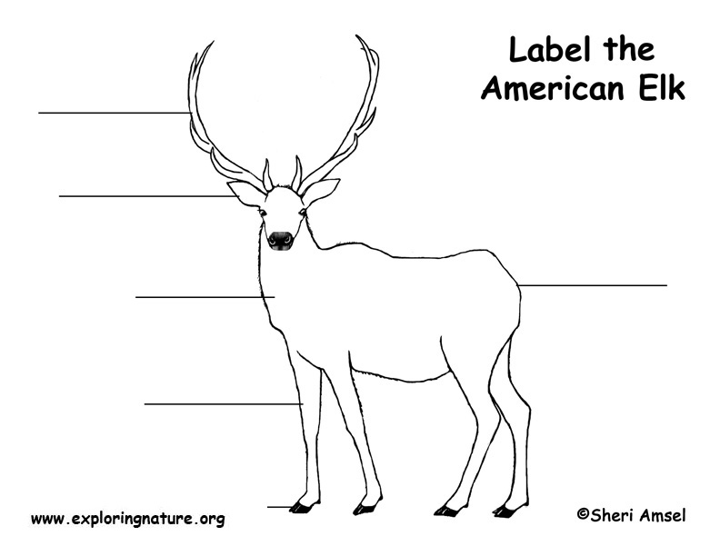Luxury Elk Anatomy Diagram Festooning - Anatomy And Physiology ...