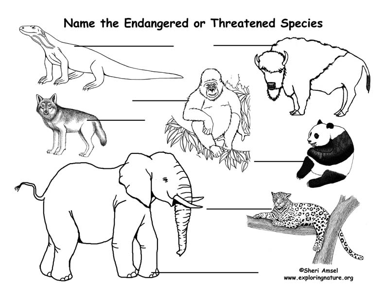 Endangered Species Labeling Pages