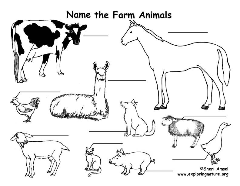 Farm Animals Labeling Page