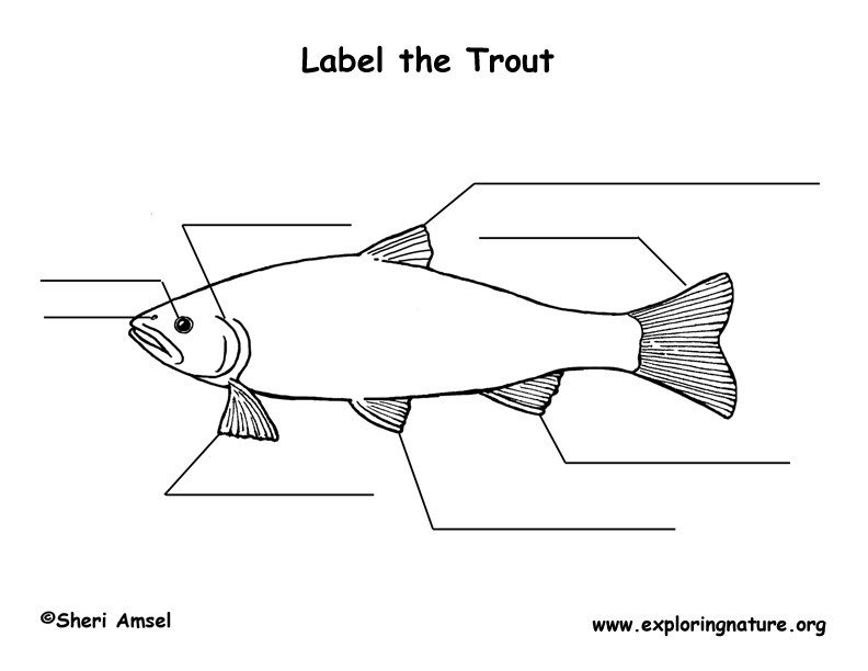 trout labeling page