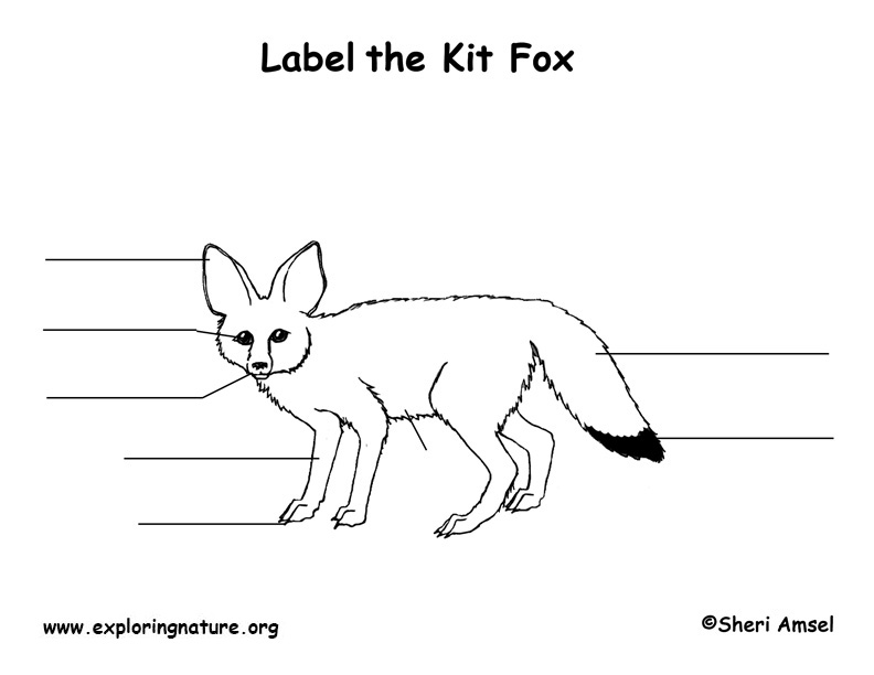 Fox (Kit) Labeling Page