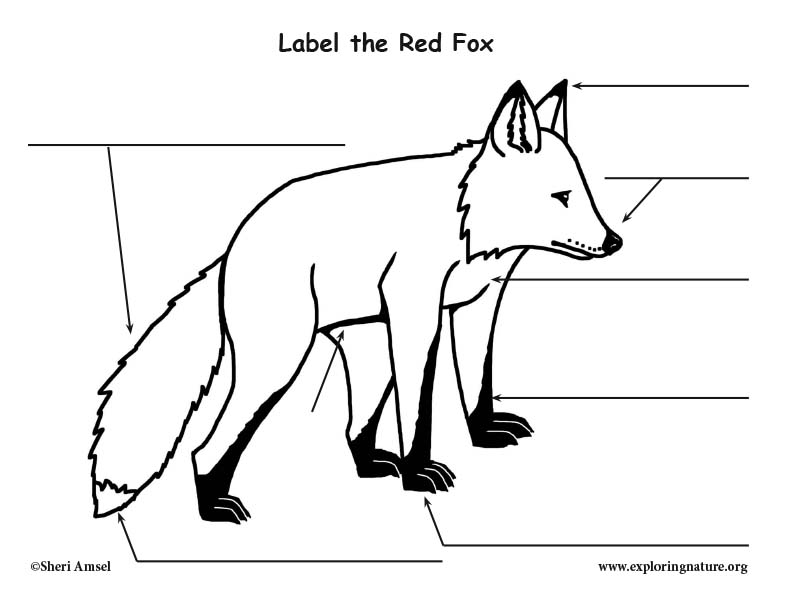 Fox (Red) Labeling Page
