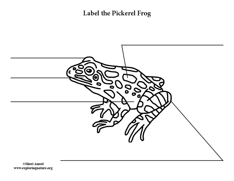 Frog (Pickerel) Labeling Page