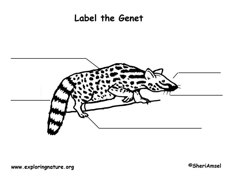Genet  Labeling Page