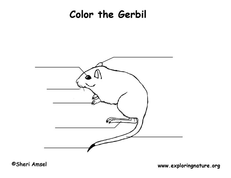 Gerbil  Labeling Page