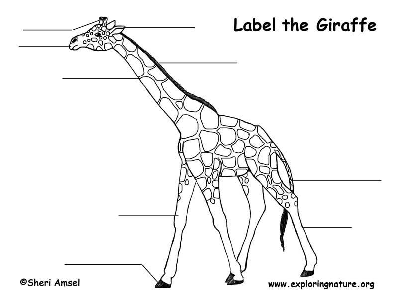 giraffe_labeling.jpg