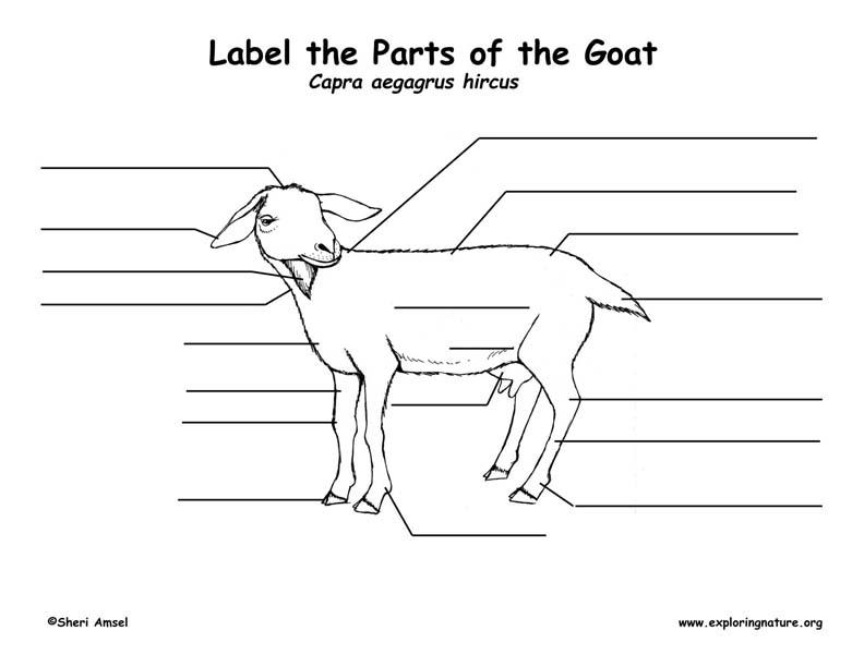 Body Diagram Of A Goat - Wiring Diagram Database