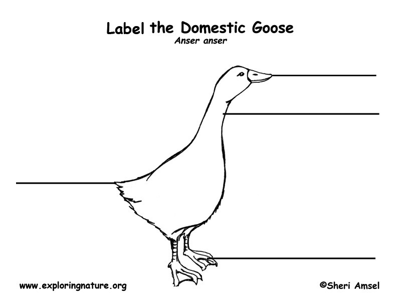 Goose Labeling Page