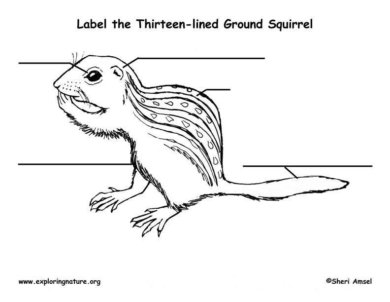 Ground Squirrel (Thirteen-lined) Labeling Page