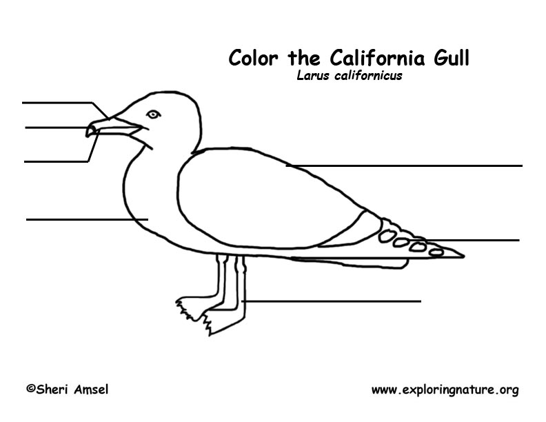 Gull (California) Labeling Page