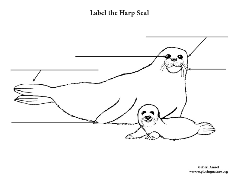 Seal (Harp) Labeling Page