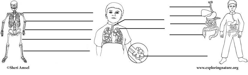 Human Body Labeling Pages