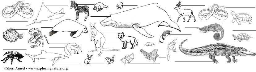 Animal Group Labeling Pages