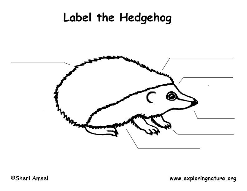 Hedgehog  Labeling Page